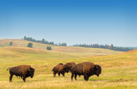 OPTION: BISON SAFARI JEEP TOUR