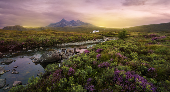 Scottish Highlands Purple Field