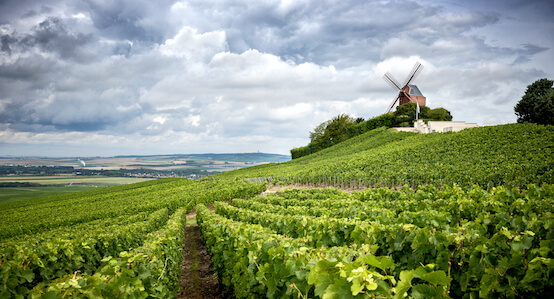 Champagne Region in France